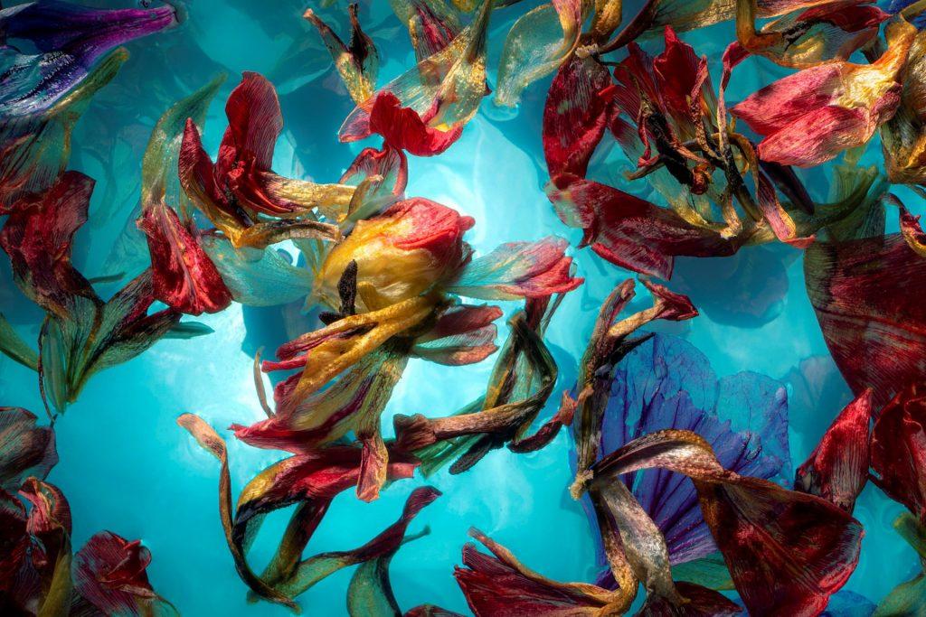 Marjon-Trap-Fugacious-Flowers-I-90x135-€1695,-